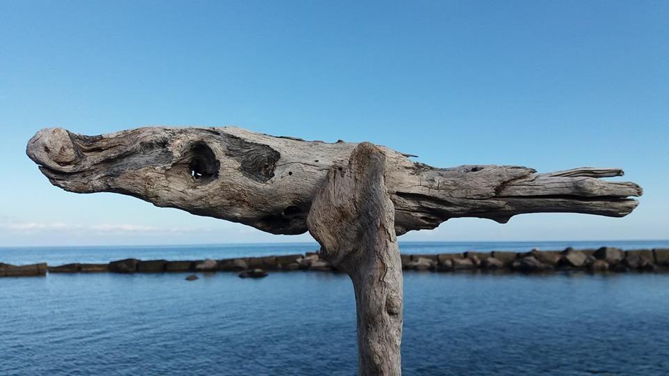 """""""Ho pescato un legno, è volato un pesce"""""""