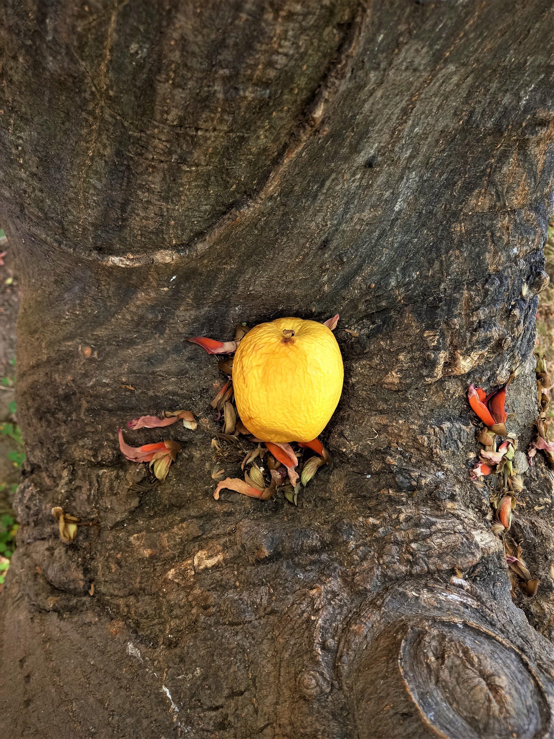 il giardino dentro il giardino villa bellini il segreto della mela