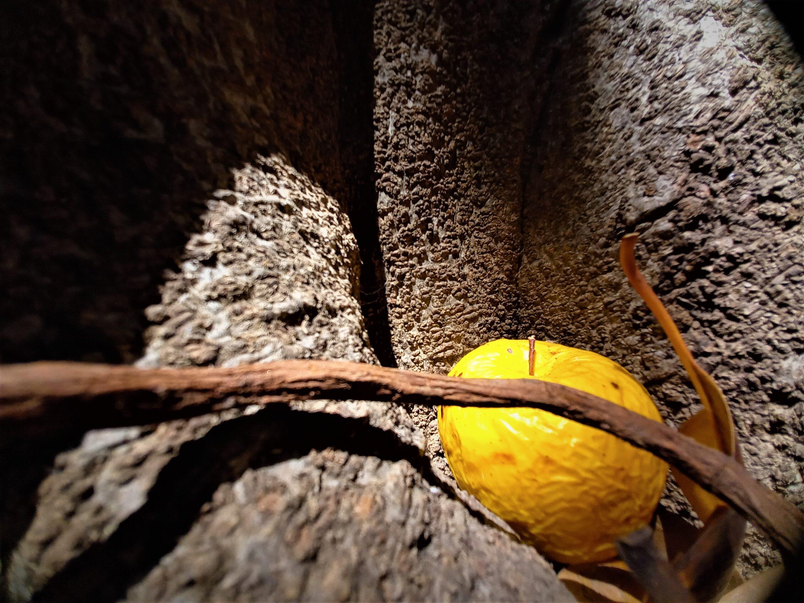 il segreto della mela sicily contemporary artist