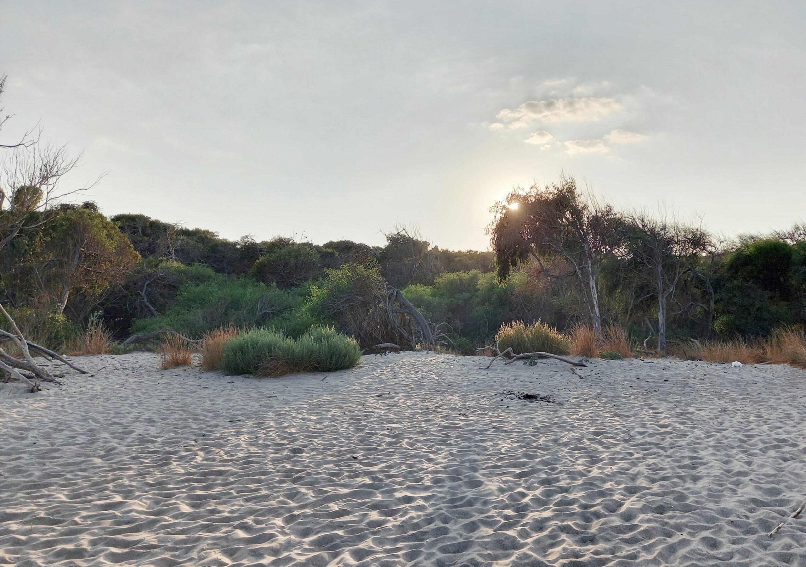 oasi del simeto respect planet imprints art